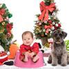 犬猫ペットご家族の写真撮影スタジオ/410319.studio