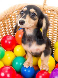 犬撮影スタジオの写真 カニヘンダックス