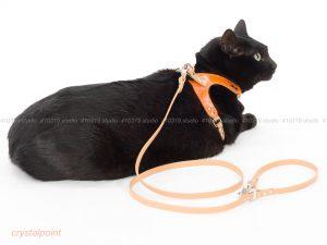 猫撮影スタジオの写真 日本猫