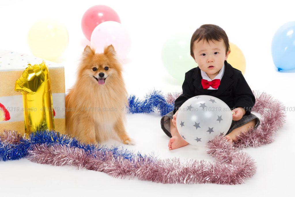 犬猫ペットご家族の写真撮影スタジオ ポメラニアンとご家族 /410319.studio