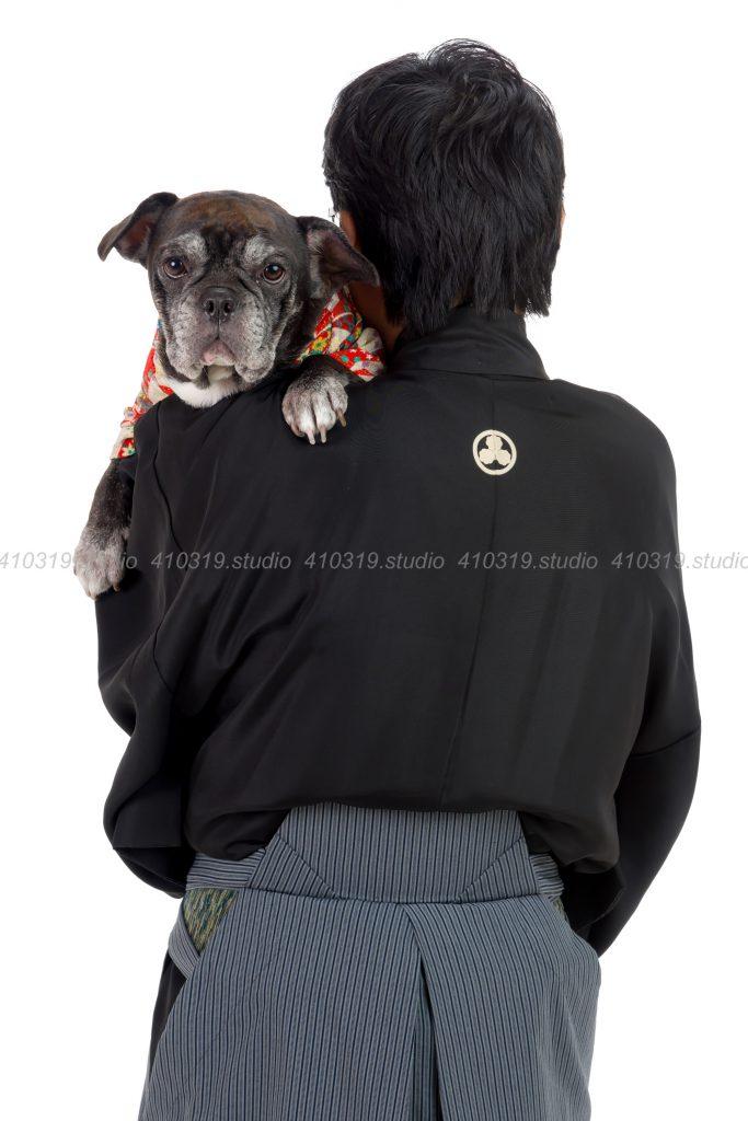 犬撮影スタジオの写真 フレンチブルドッグ