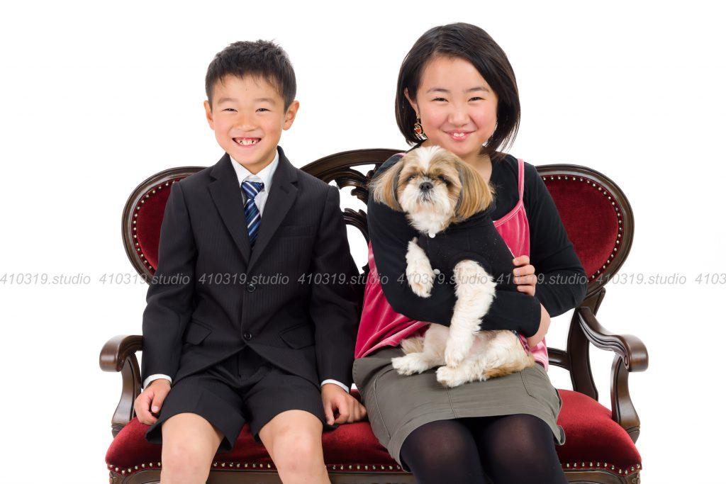 犬撮影スタジオの写真 シーズー