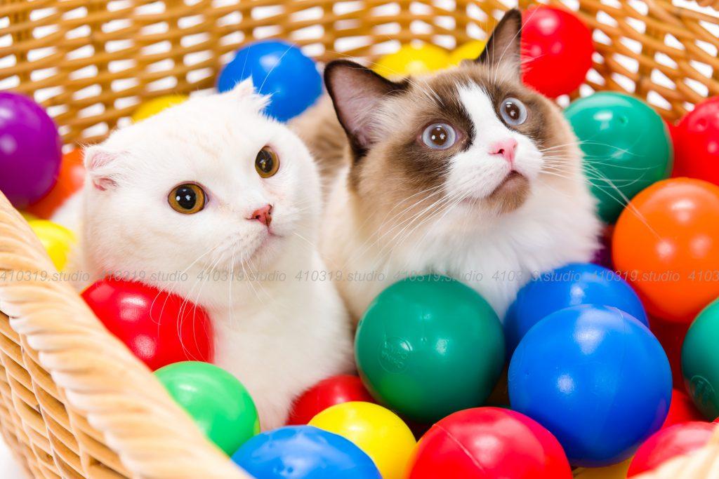猫撮影スタジオの写真