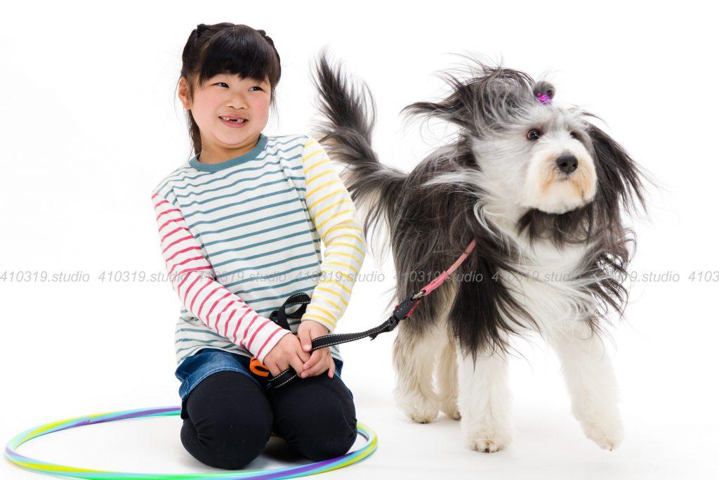 犬撮影スタジオの写真 ビアデットコリー