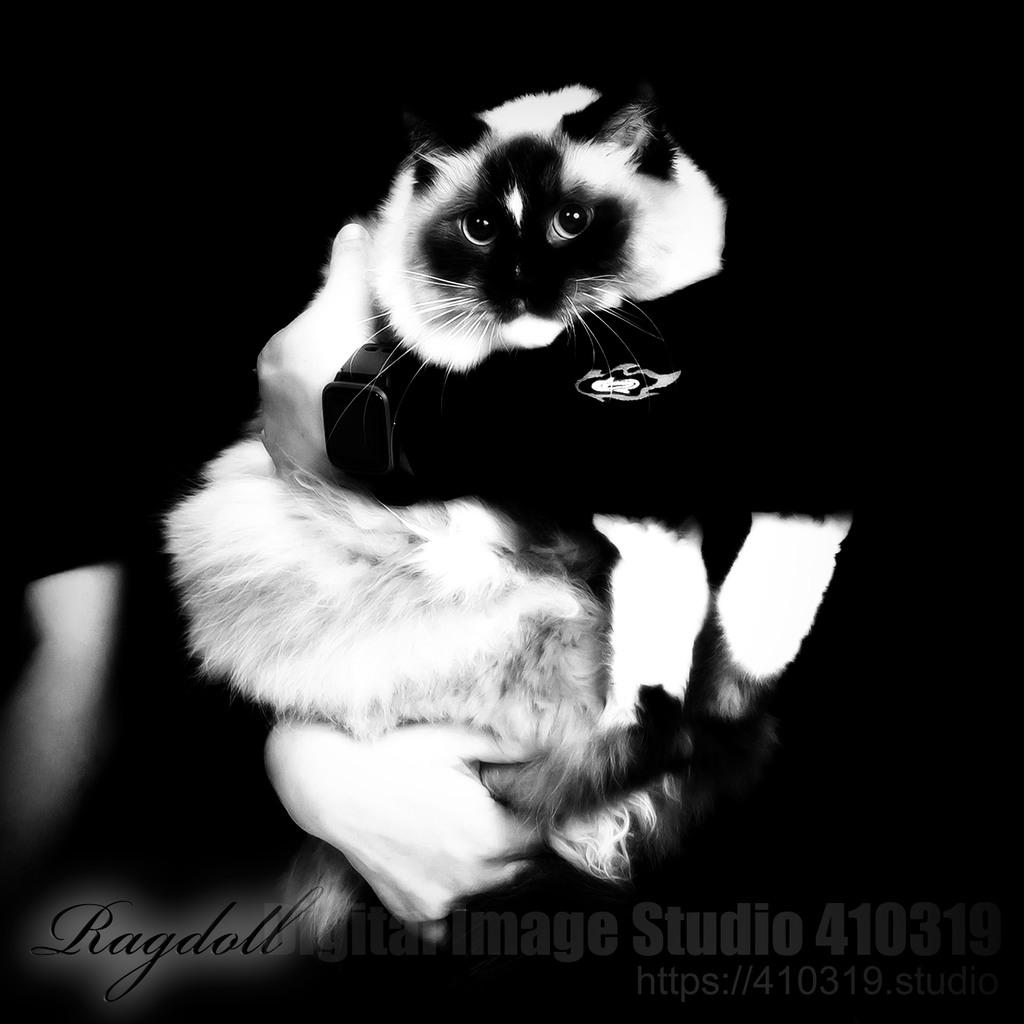 ラグドール 410319.studio